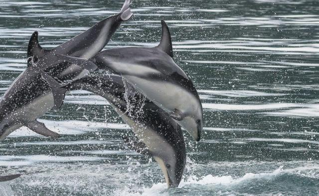 Lodí do divočiny za delfíny