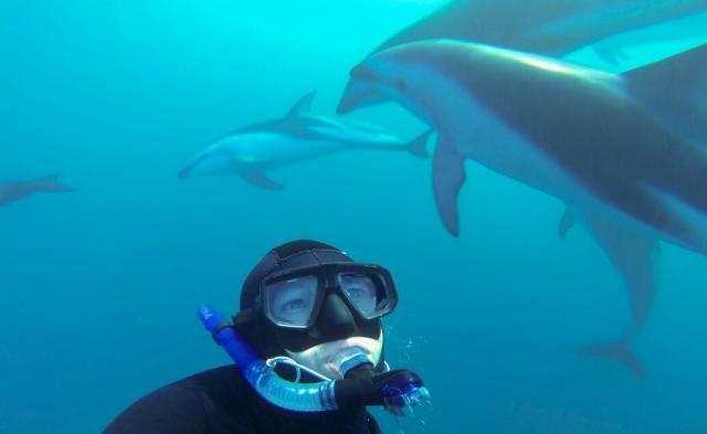 Plavání s delfíny v Kaikoura