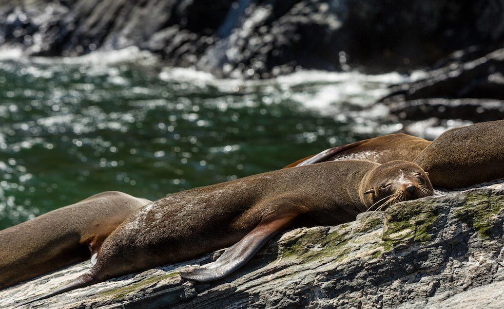 Vyhlídková plavba NATURE CRUISE (fjord Milford Sound)