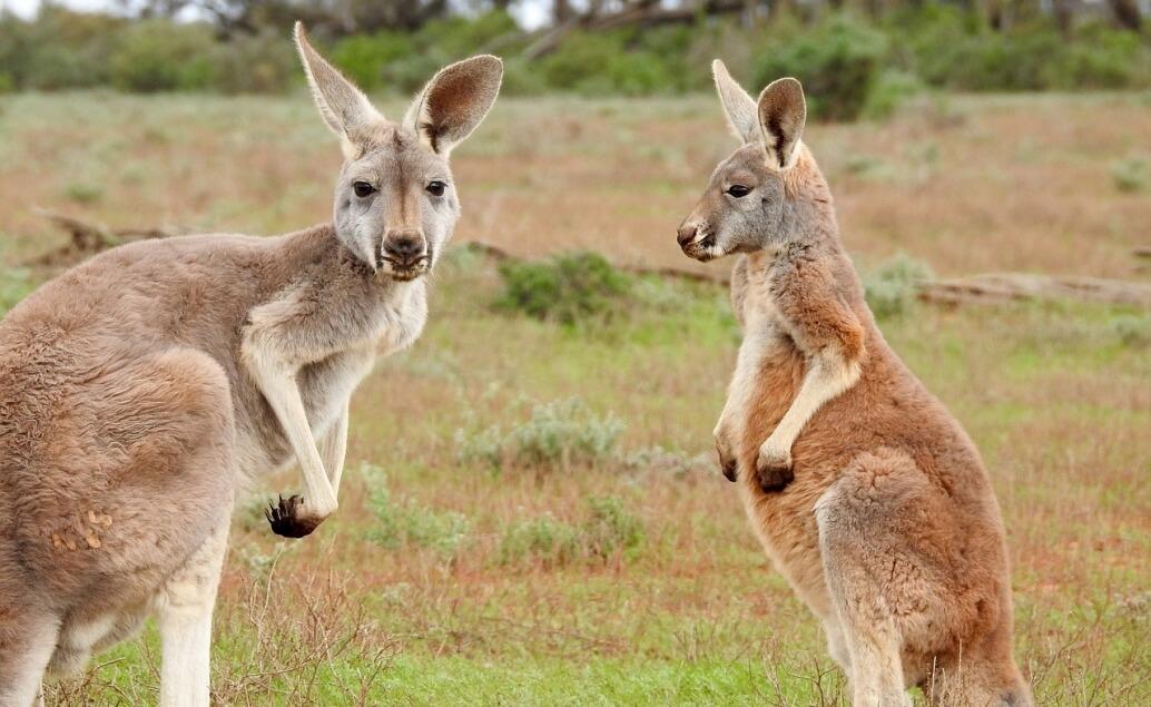 Zájezd Nový Zéland a Sydney Klokan