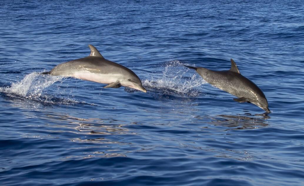 Zájezd Nový Zéland a Sydney Delfíni