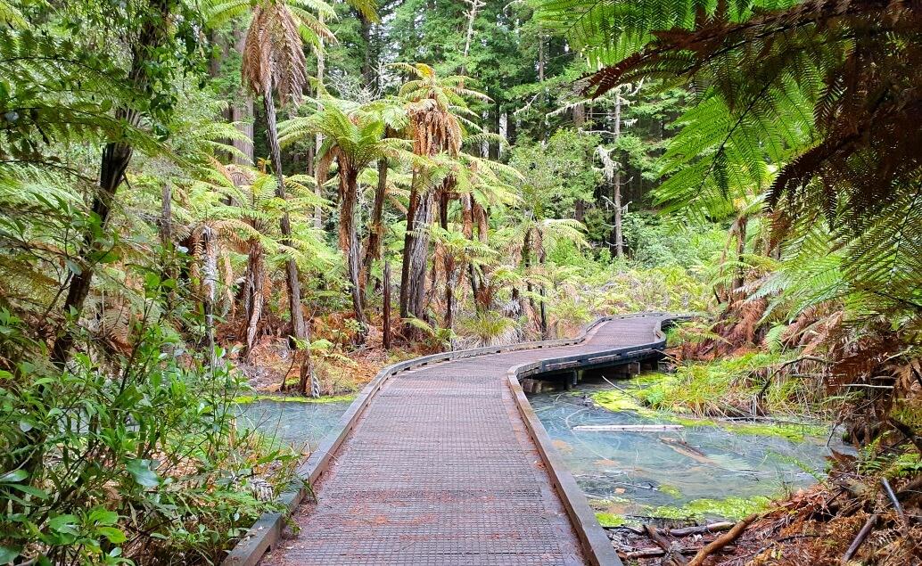 Nový Zéland aktivně pro mladé Redwood Forest
