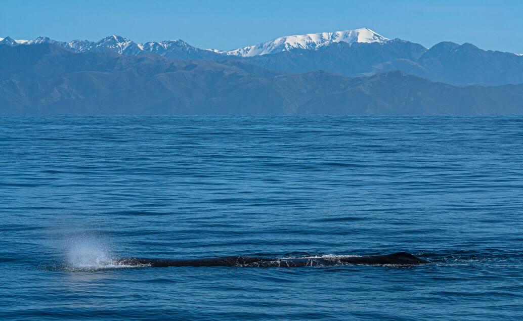 Pozorování velryb Kaikoura